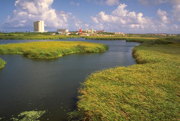 Bird Sanctuary (Potret: Aruba Tourism Authority)
