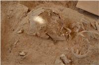 Archeologische vondst in Santa Cruz